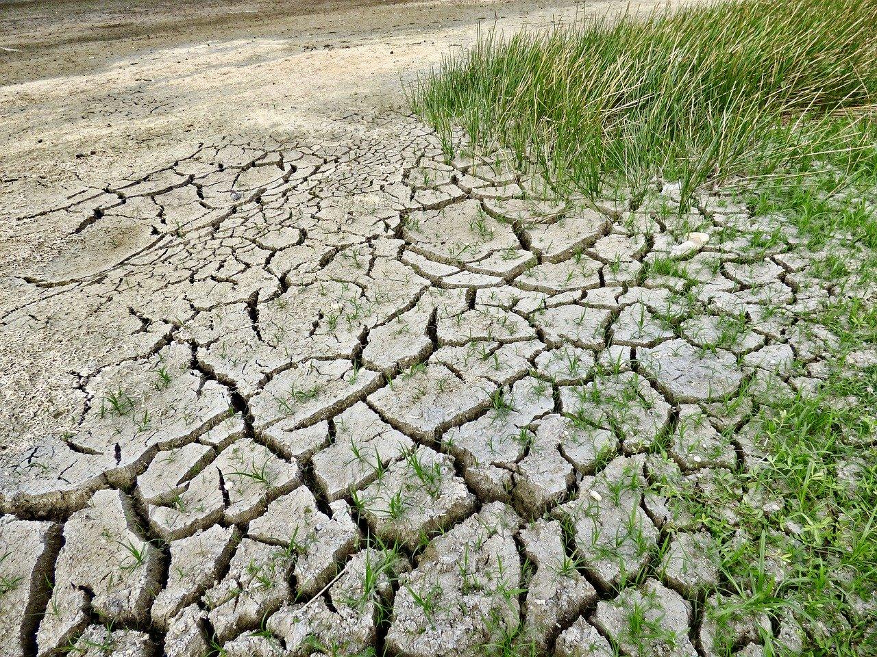Cambiamenti climatici. Fare i conti con i cigni verdi