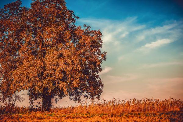 Alla ricerca dei temi caldi dell'autunno sui mercati finanziari