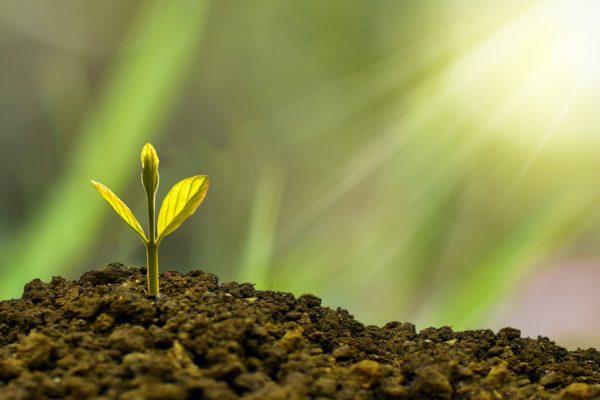 Sustainability-Linked Bonds. L'evoluzione della specie nelle obbligazioni ESG
