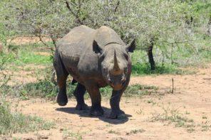 Il Rhino Bond e le tre caratteristiche dell'investimento sostenibile