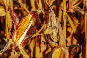 Materie prime alimentari care? Potrebbe essere solo l'inizio